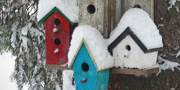 winter bird houses crop