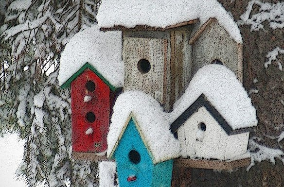 winter bird houses cropped